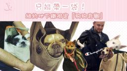 jun5onebagonedog