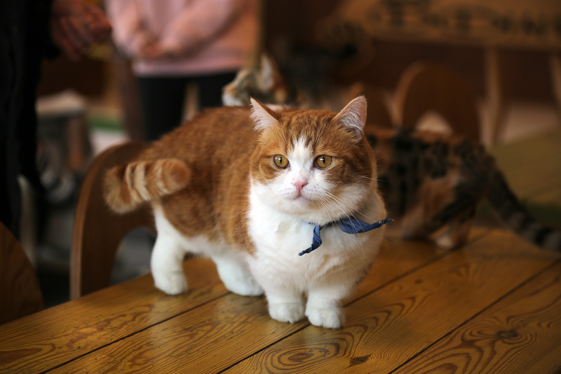 cat-2227906_1920