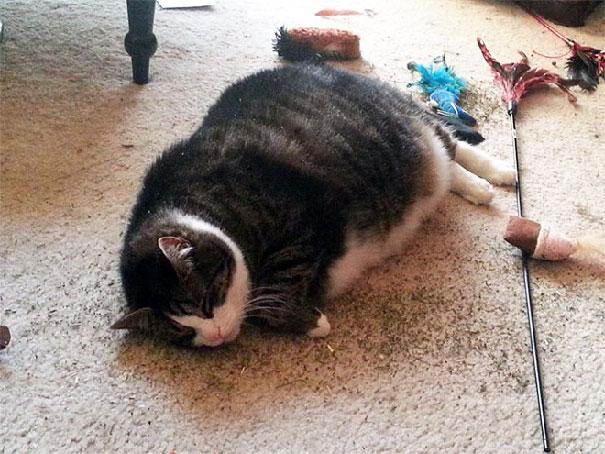 funny-cats-catnip-101-59423381eafdb__605