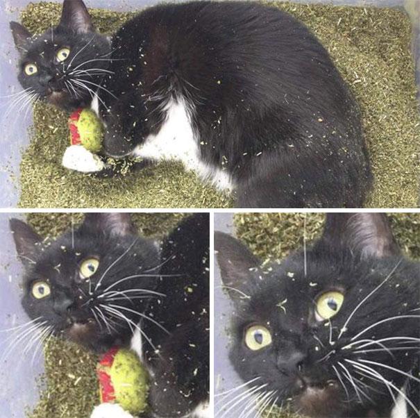 funny-cats-catnip-31-5941297b640d6__605