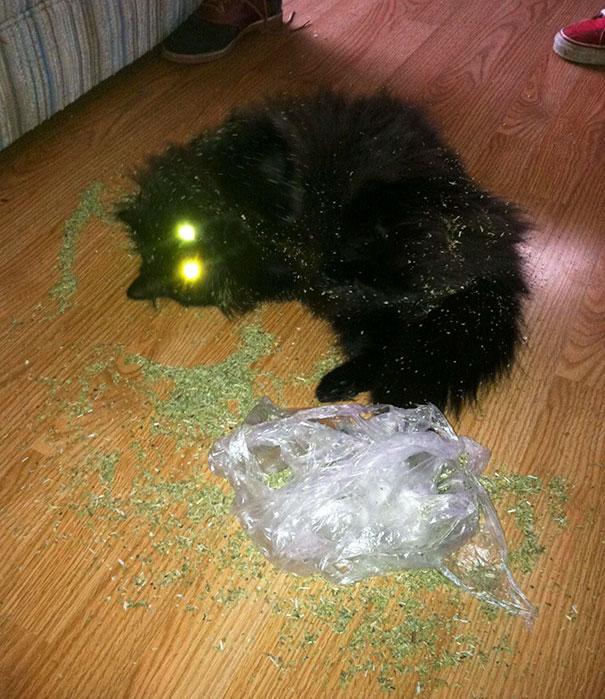 funny-cats-catnip-6-5940ddc2087a7__605