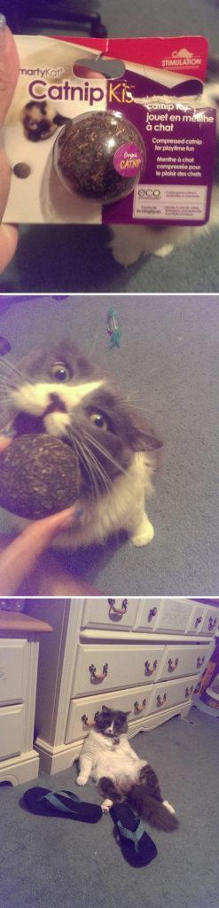 funny-cats-catnip-66-594148275de6a__605