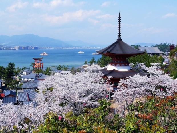 復活節「撞正」日本櫻花旺季,機票價格暴升。