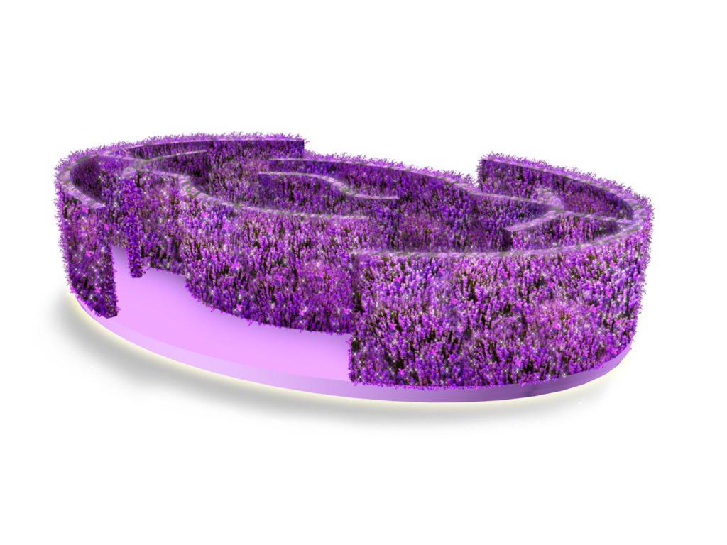 薰衣草紫海迷宮